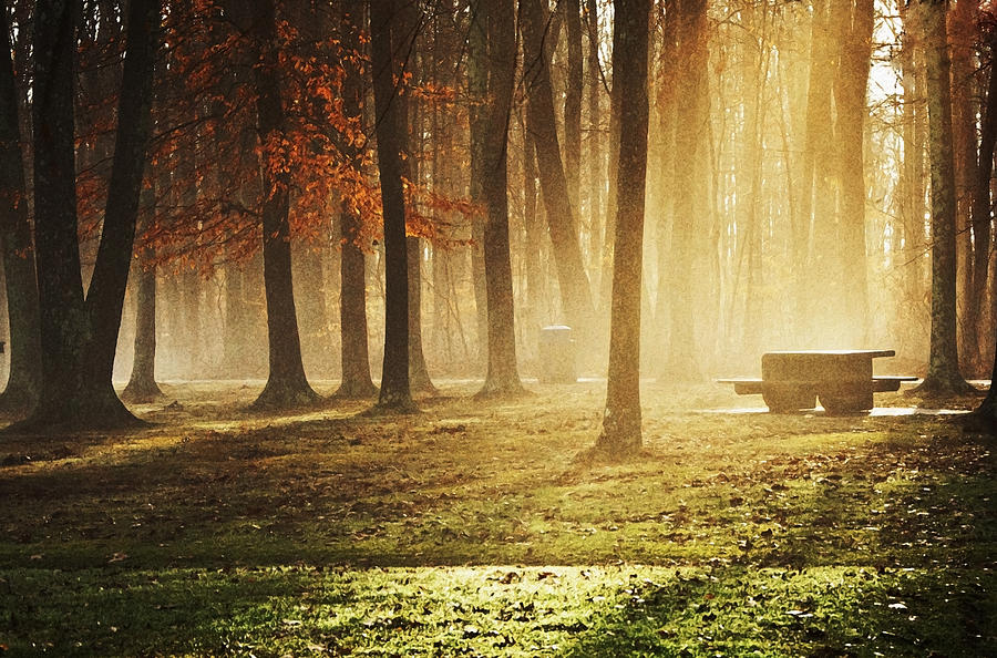 Nature Photograph - Sunshine Through The Woods by Diana Boyd