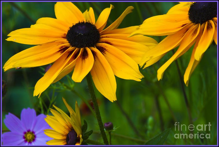 Sunshine Photograph by Timothy J Berndt