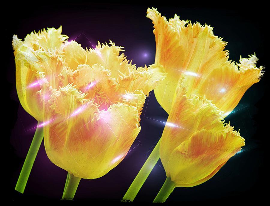 Tulips Digital Art - Sunshine Tulips by Debra  Miller
