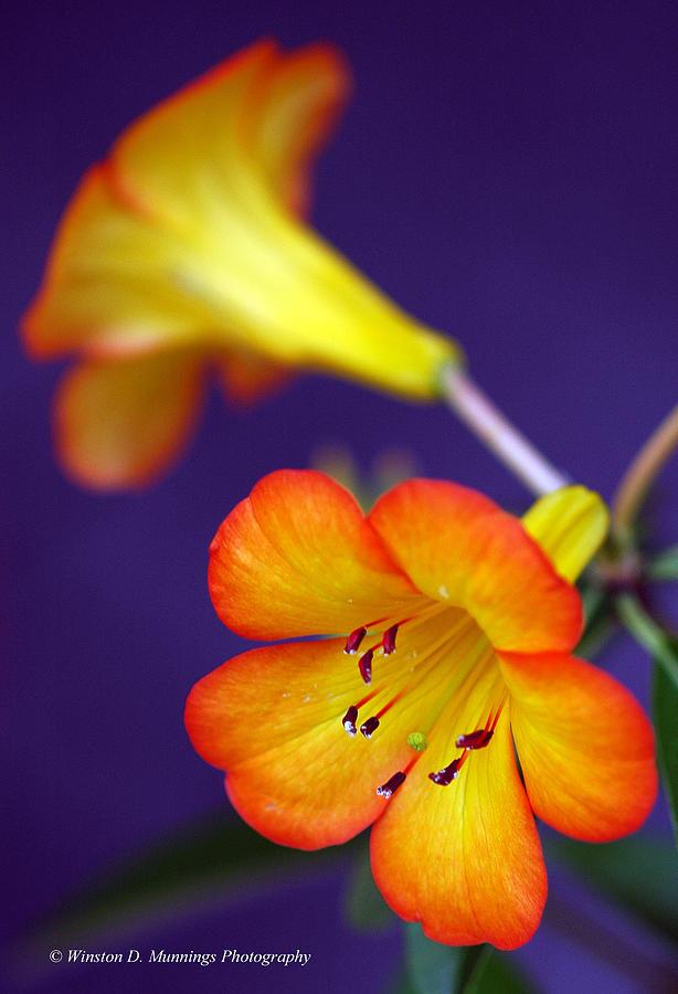 Flowers Photograph - Sunshine by Winston D Munnings