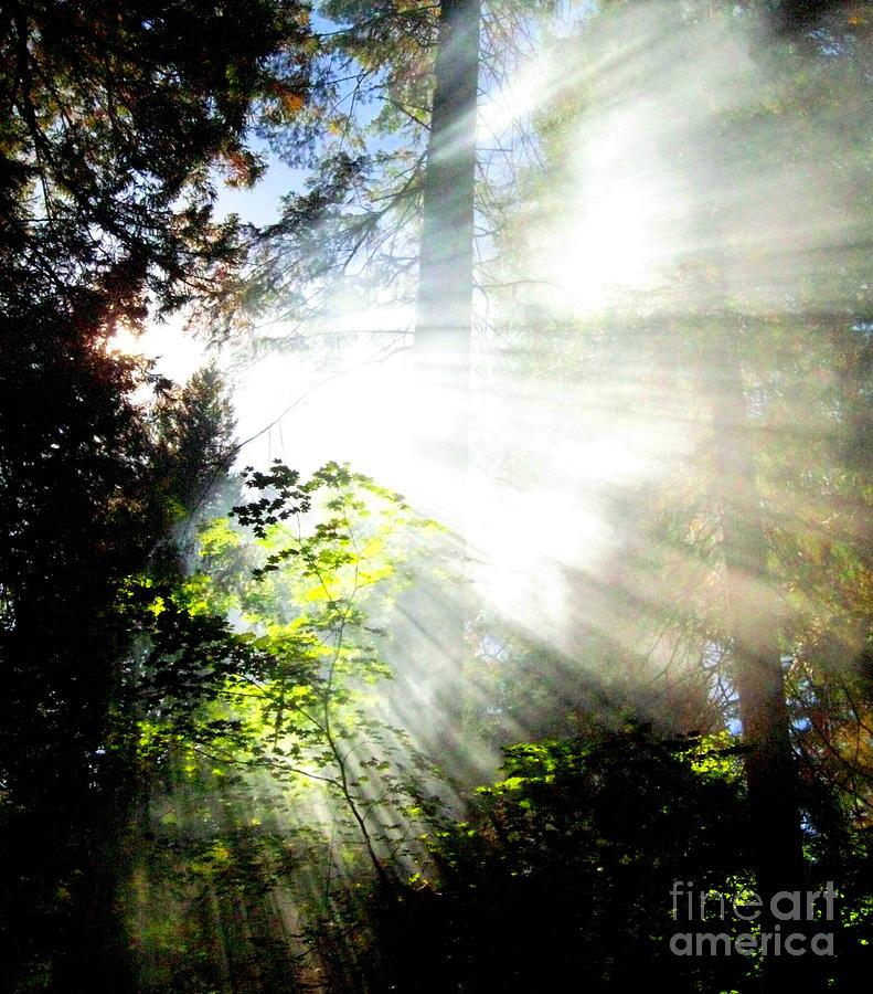 Landscape Painting - Sunstream by Shasta Eone