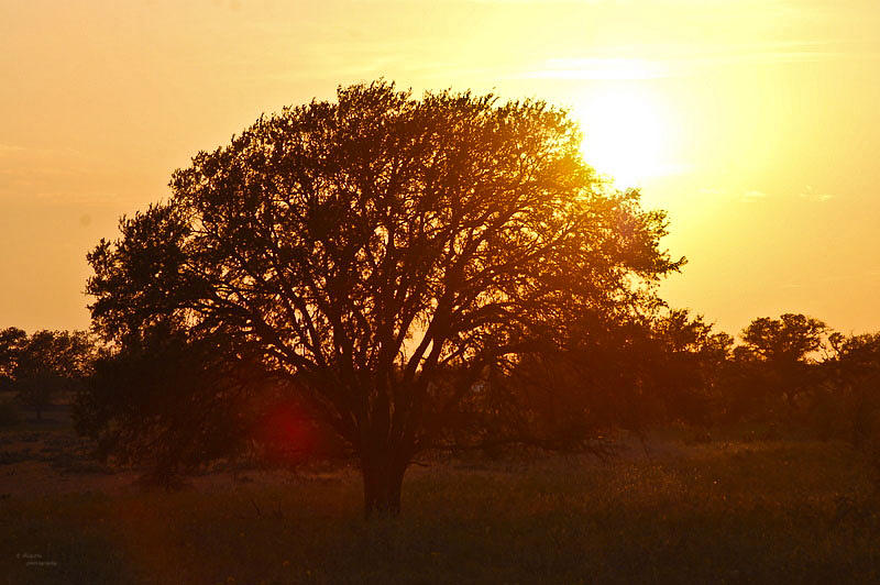 Sunset Photograph - Suntree by Teresa Dixon