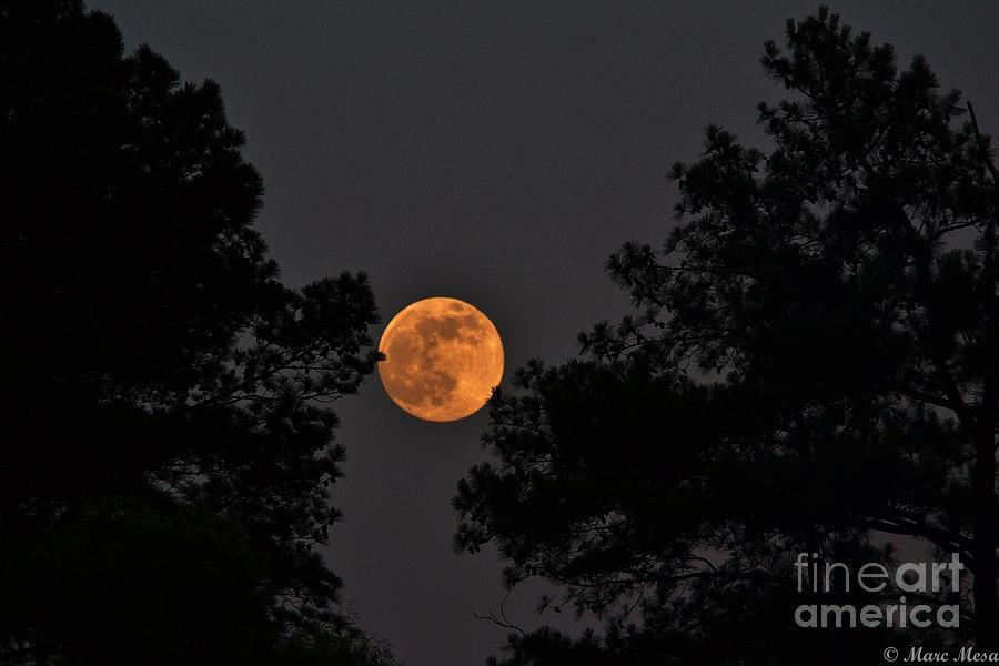 Super Moon Photograph - Super Moon by Marc Mesa
