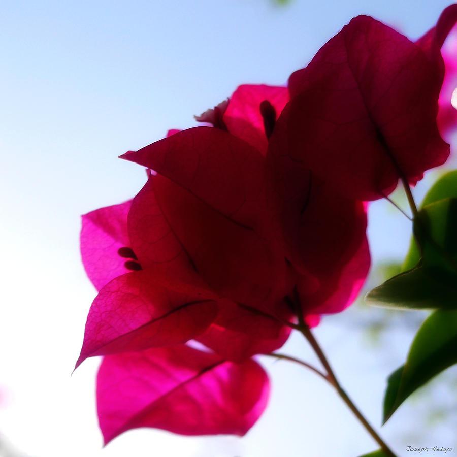 Flower Photograph - Super Red Flower by Joseph Hedaya