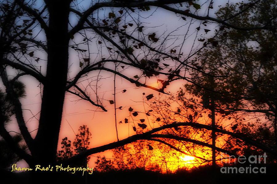 Sunset Photograph - Super Sunset by Sharon Farris