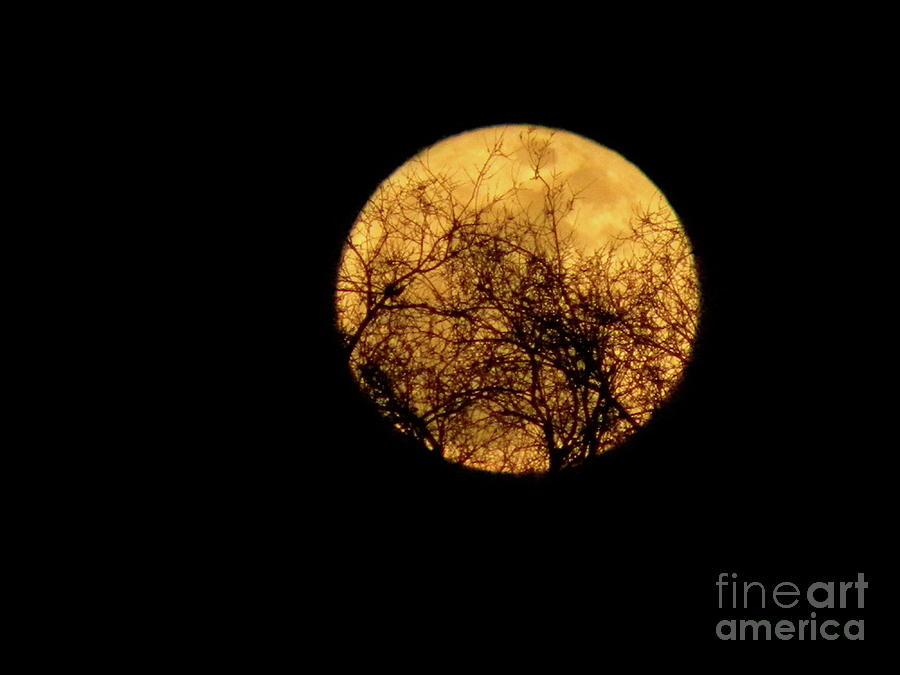 Super Moon Photograph - Supermoon 2 by Laura Yamada