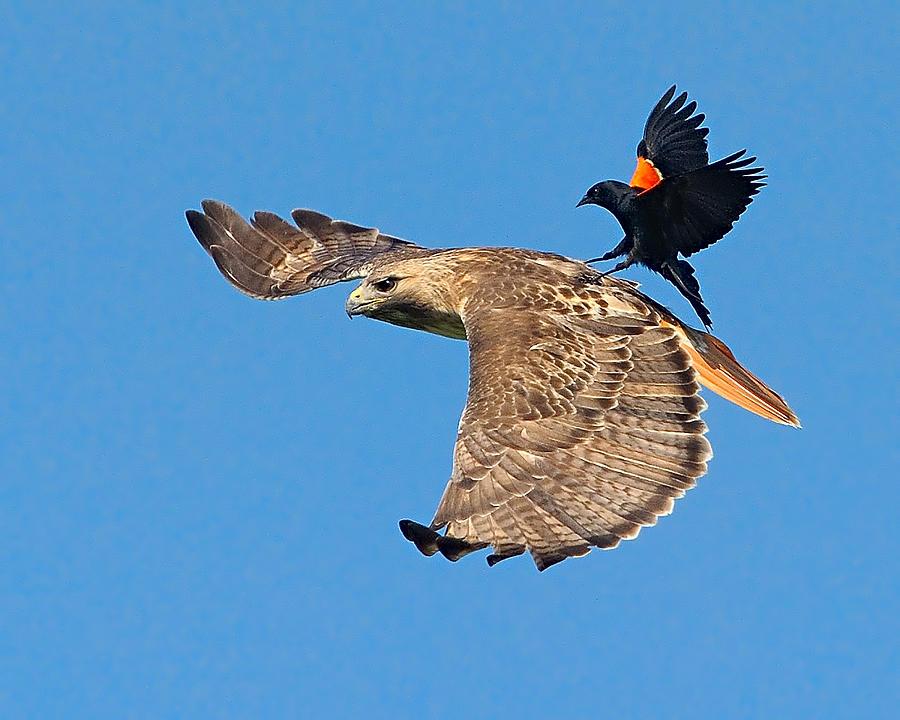 Surfer Bird  by William Jobes