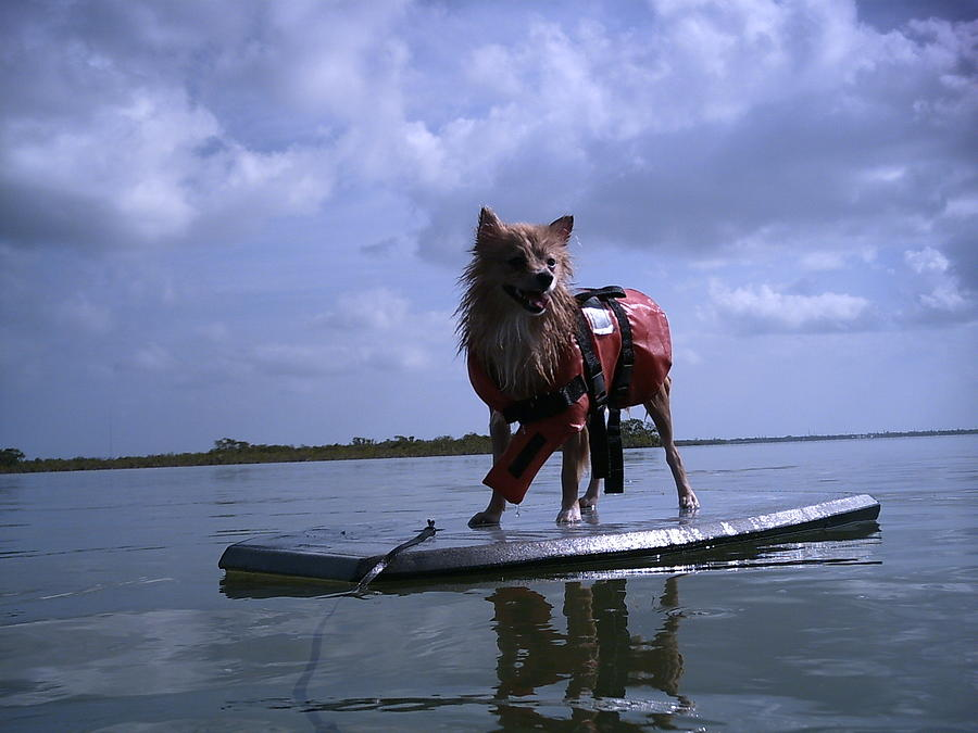 Puppy Photograph - Surfer Dog by Susan Sidorski