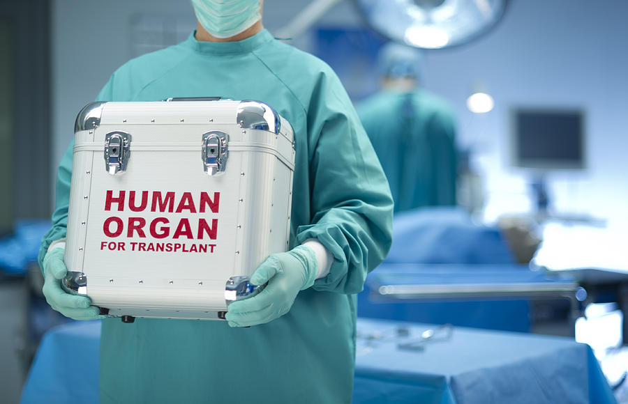 Surgeon With Organ Donation Photograph by Sturti