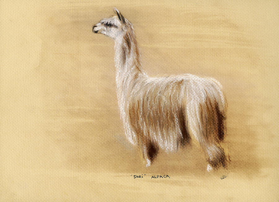 Alpaca Pastel - Suri Alpaca by Sara Cuthbert