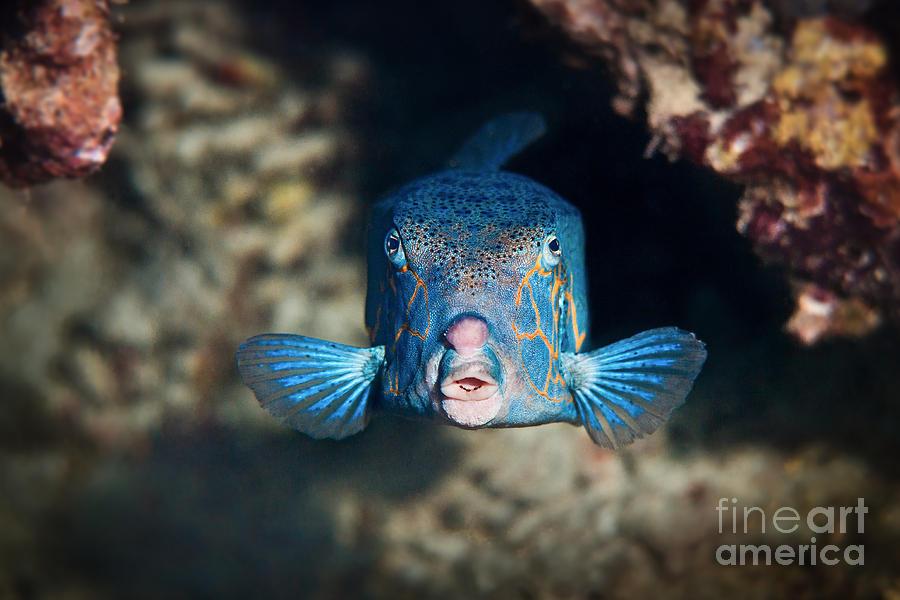 Blue Photograph - Surprise  by Andrea Timillero