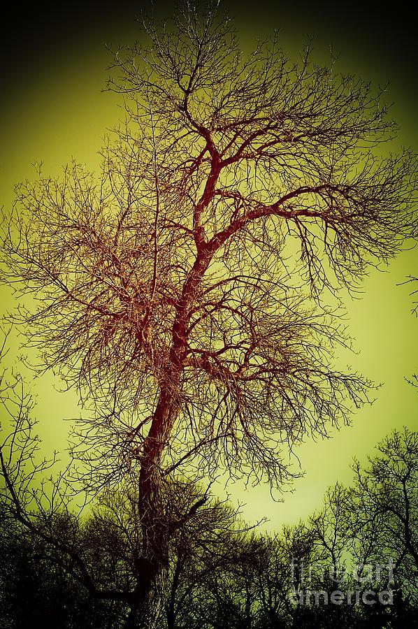 Tree Photograph - Surreal Art by Bob Mintie