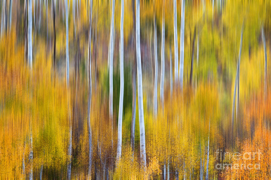 Surreal Aspen Tree Magic Abstract Art Photograph