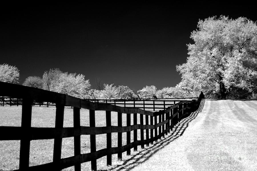 Infrared photograph surreal black white infrared fence landscape by kathy fornal