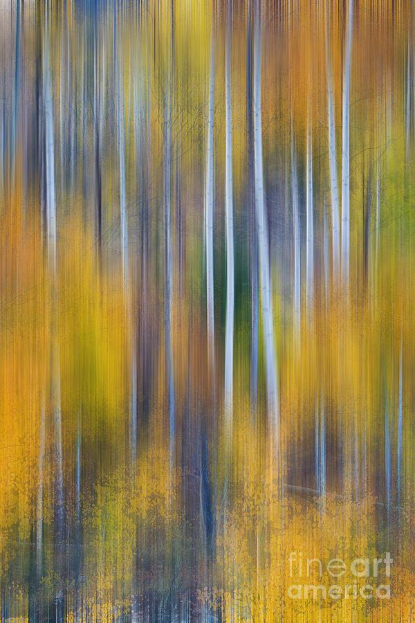 Surreal Colorful Aspen Tree Magic Abstract Photograph