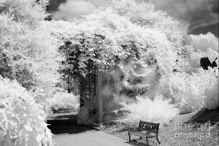 Infrared photography photograph surreal dreamy ethereal black and white infrared garden landscape by kathy fornal