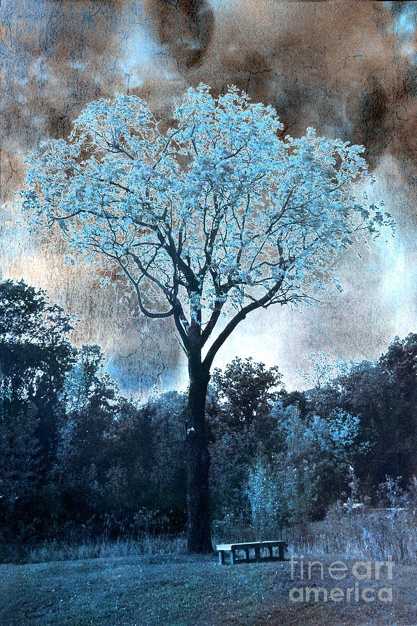 Surreal Fantasy Dreamy Blue Fairytale Tree Nature