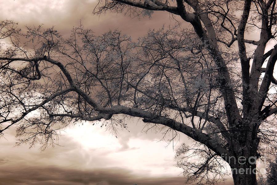 Surreal Fantasy Gothic South Carolina Oak Trees Photograph by Kathy Fornal