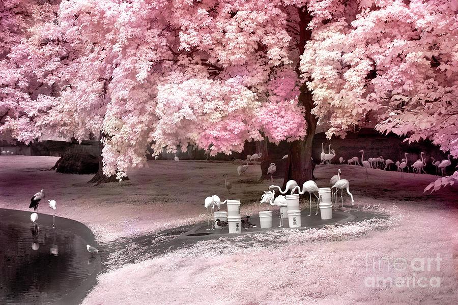 Surreal Fantasy Pink Flamingo Pond Infrared Nature