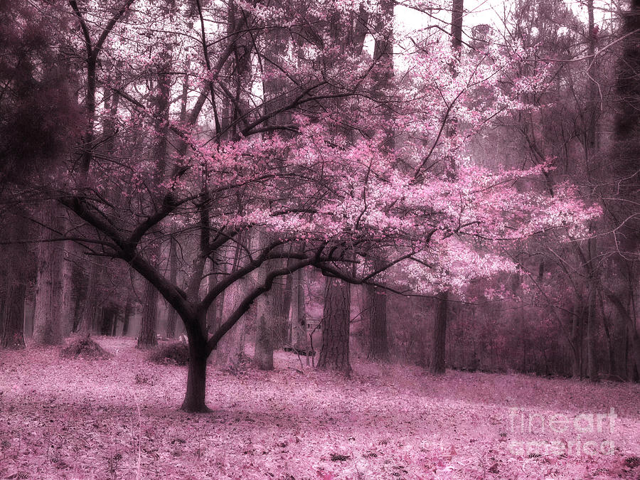 nature photography photograph surreal fantasy pink trees nature landscape by kathy fornal - Pink Trees