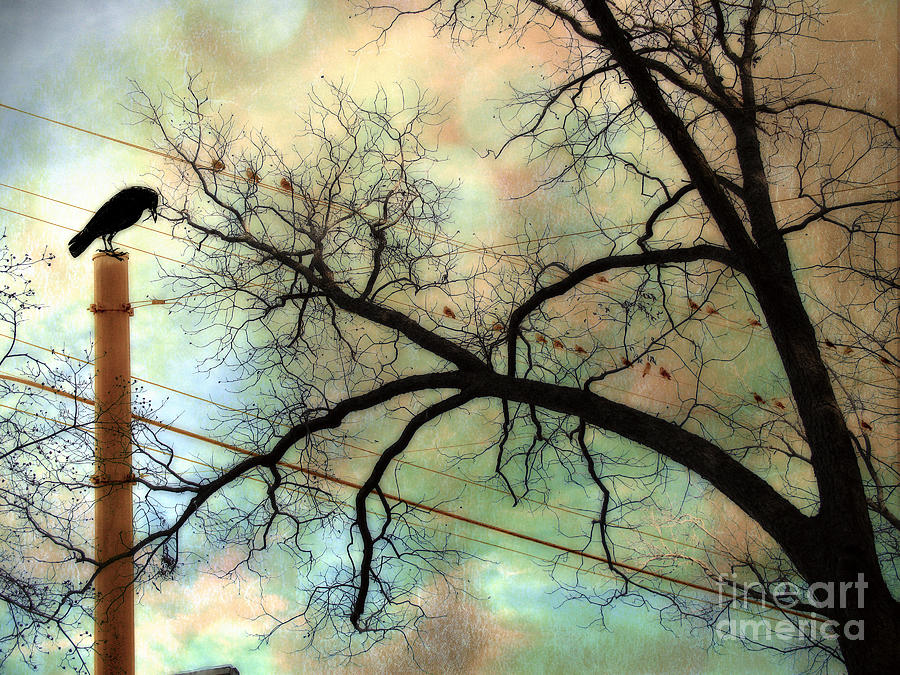 Surreal Gothic Fantasy Trees Photograph - Surreal Gothic Crow Ravens Birds Fantasy Nature  by Kathy Fornal