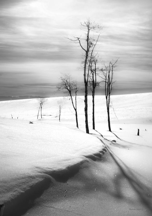 Outdoors Photograph - Surreal Snowscape 2 by Theresa Tahara