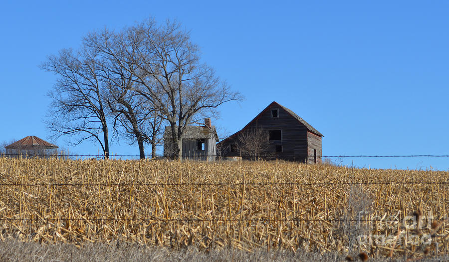 Corn Photograph - Surrounded By Corn by Renie Rutten