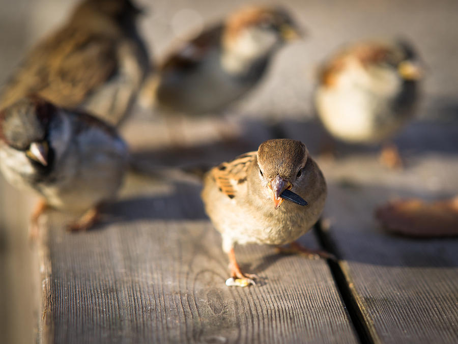 Adorable Photograph - Survival Of The Fittest by Alexander Senin