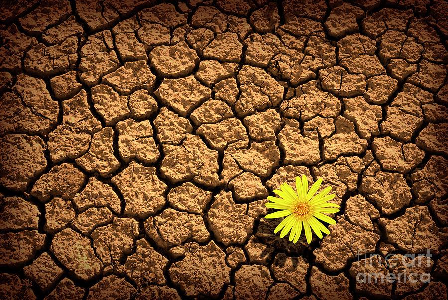 Agriculture Photograph - Survivor by Carlos Caetano