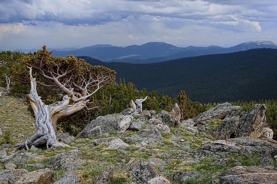 Tree Photograph - Survivor by Gary Holmes