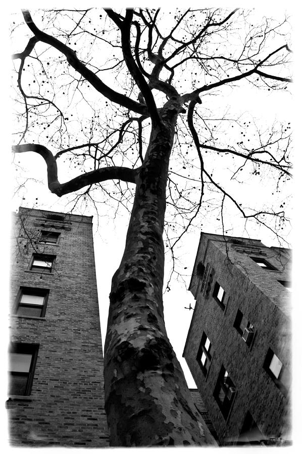Queens Photograph - Survivor by Larry Goss