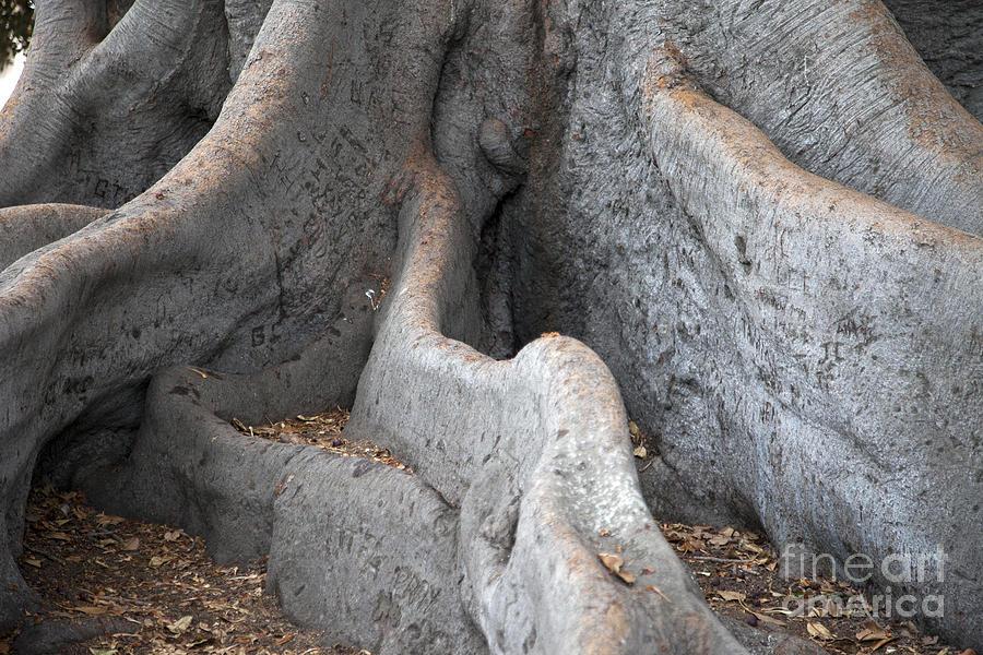Tree Photograph - Survivor2 by Amanda Barcon