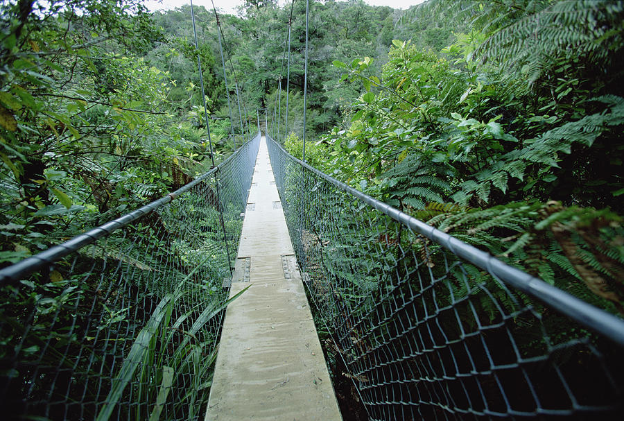 Suspension Bridge In Abel Tasman Np New Photograph by Konrad Wothe