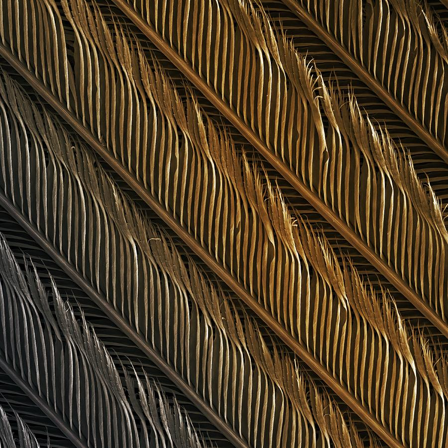Bird Photograph - Swallow Feather Detail, Sem by Power And Syred