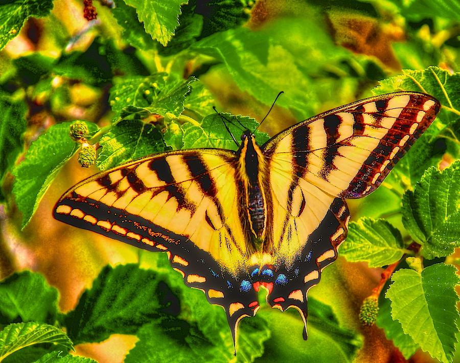 Swallowtail Butterfly Photograph - Swallowtail by Larry Bodinson