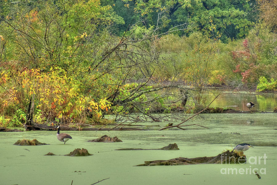 Illinois Photograph - Swamp Birds by Deborah Smolinske