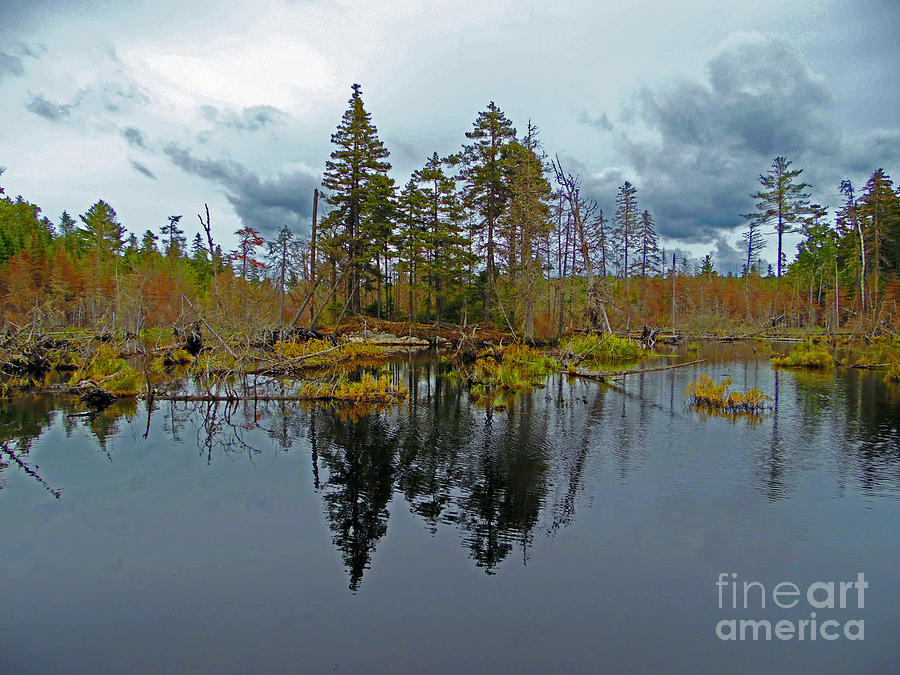 Swamp Photograph - Swamp Reflection by Helene Guertin