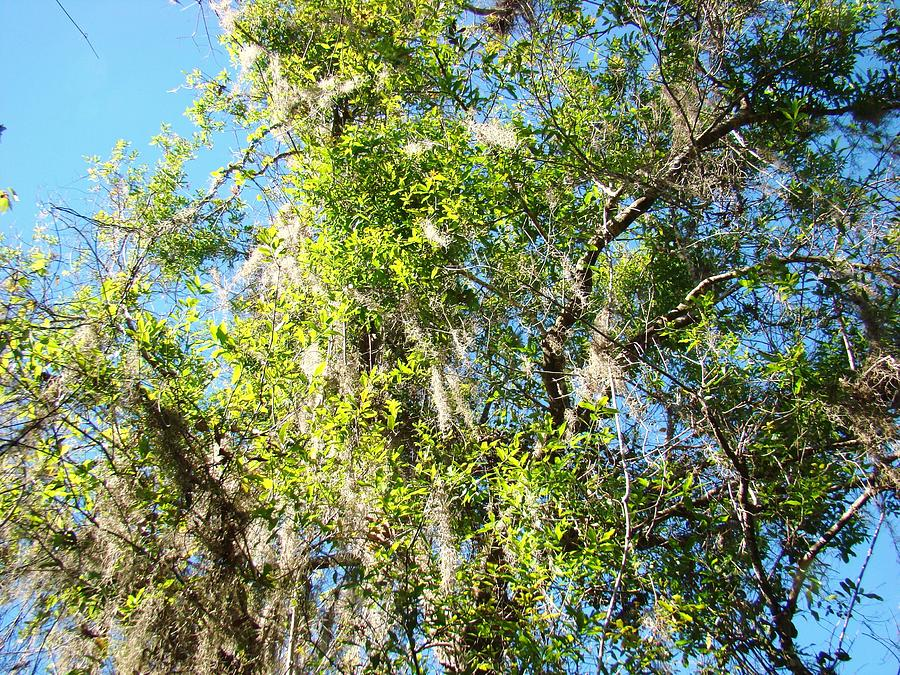 Swamp People Photograph - Swamp Tree Hugger by Van Ness