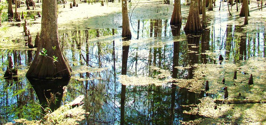 Swamp People Photograph - Swamp Wading 5 by Van Ness