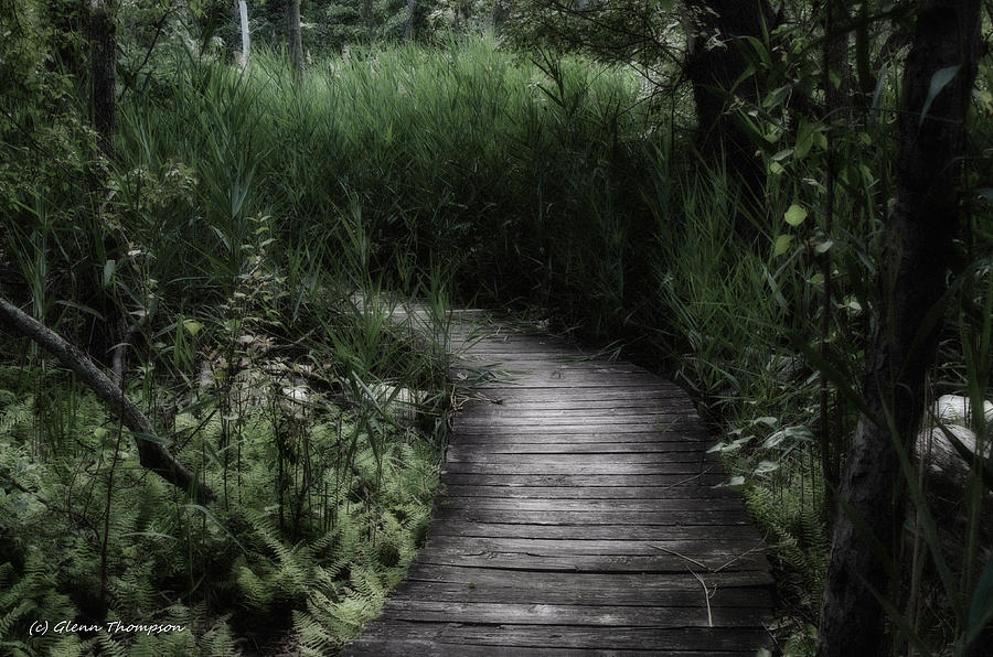 Swamp Photograph - Swamp Walk by Glenn Thompson