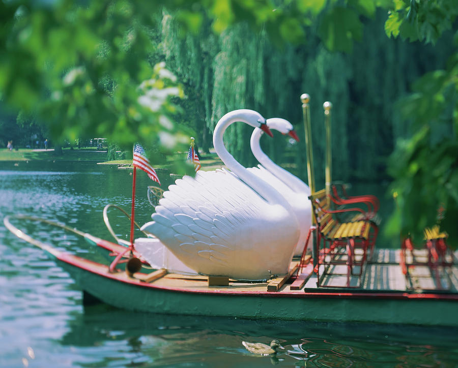 Horizontal Photograph - Swan Boats In A Lake, Boston Common by Animal Images