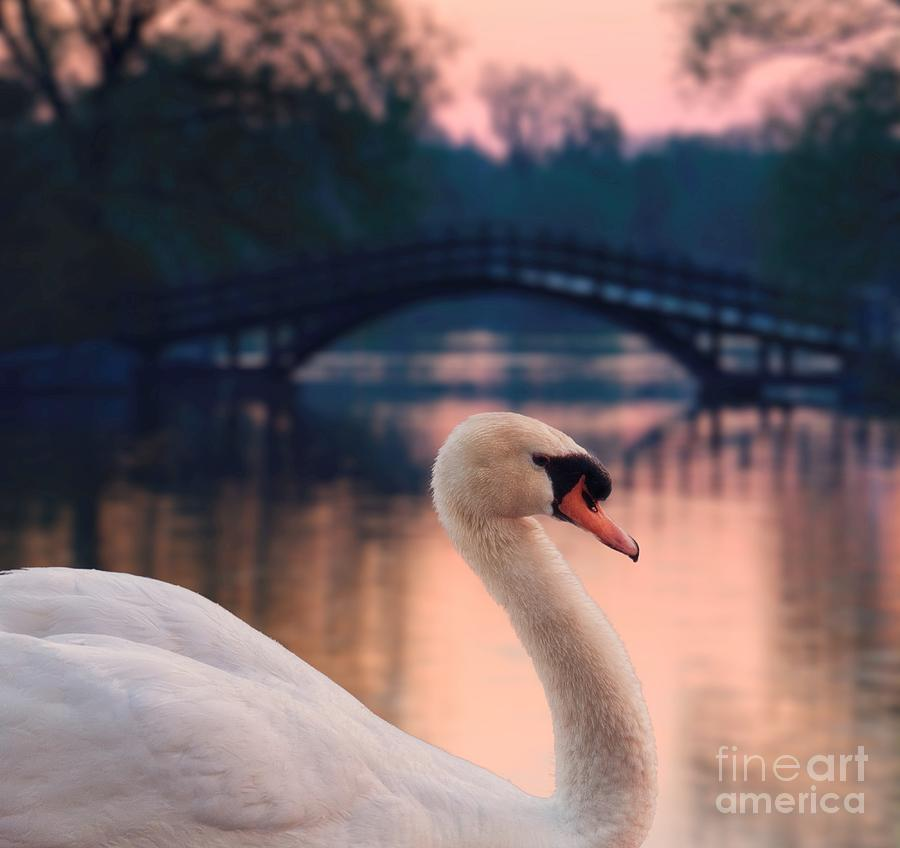 Swan Photograph - Swan Bridge by Henry Kowalski