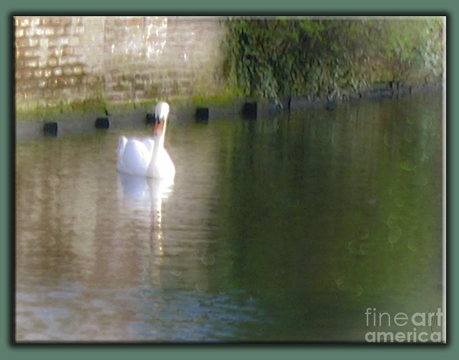 Swan Photograph - Swan In The Canal by Victoria Harrington