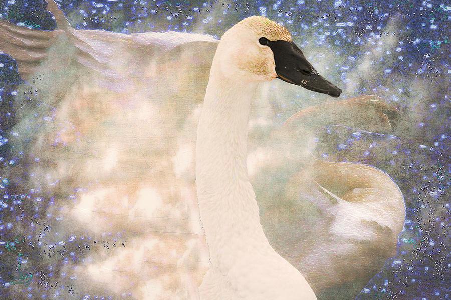 Bird Photograph - Swan Journey by Kathy Bassett