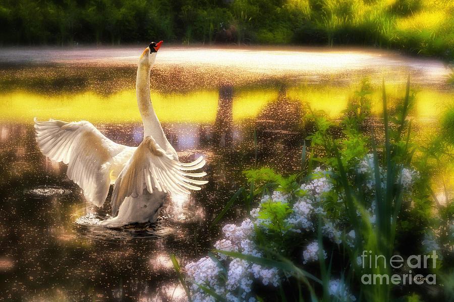 Swan Photograph - Swan Lake by Lois Bryan