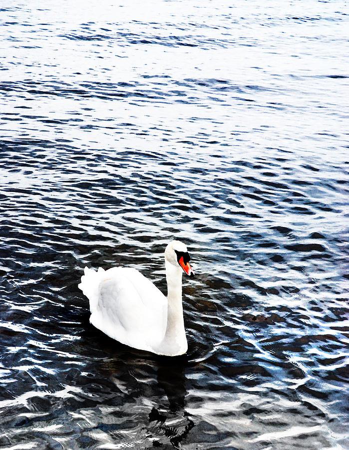 Swan Photograph - Swan by Mark Rogan