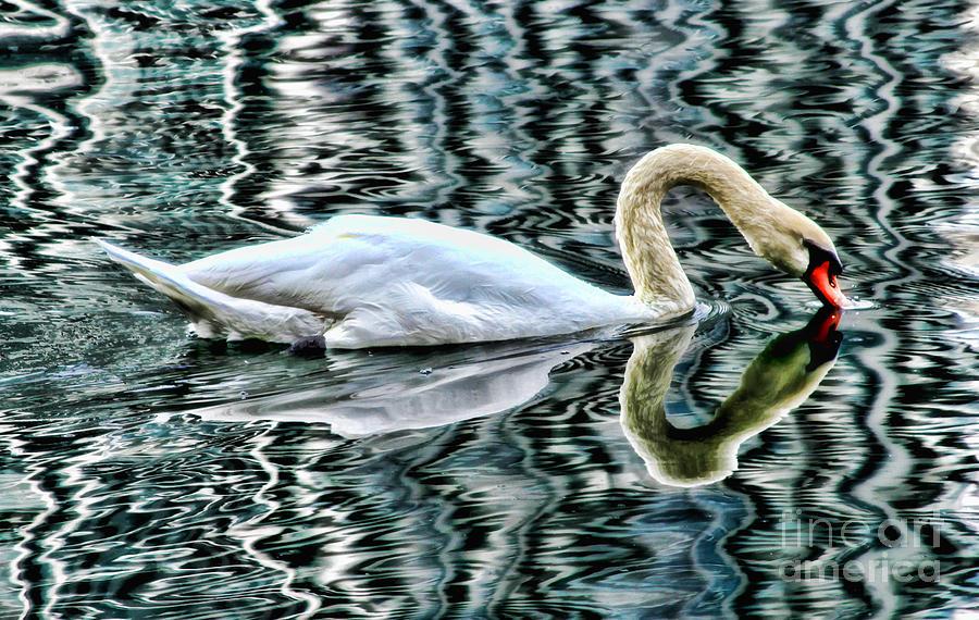 Swan on Lake Eola by Diana Sainz by Diana Raquel Sainz