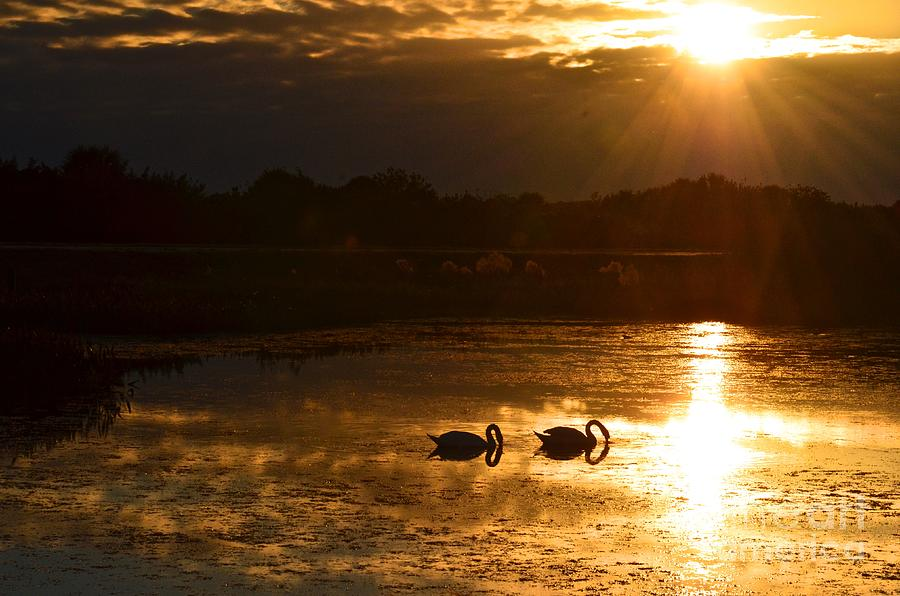 Water Photograph - Swan Song by AnnaJo Vahle