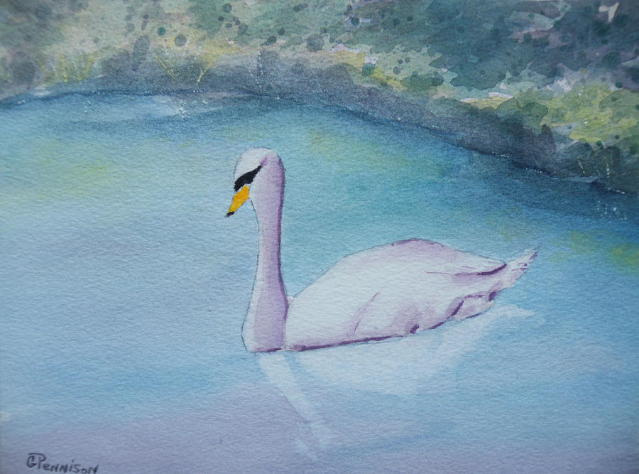 Swans Painting - Swan Study by Gilbert Pennison