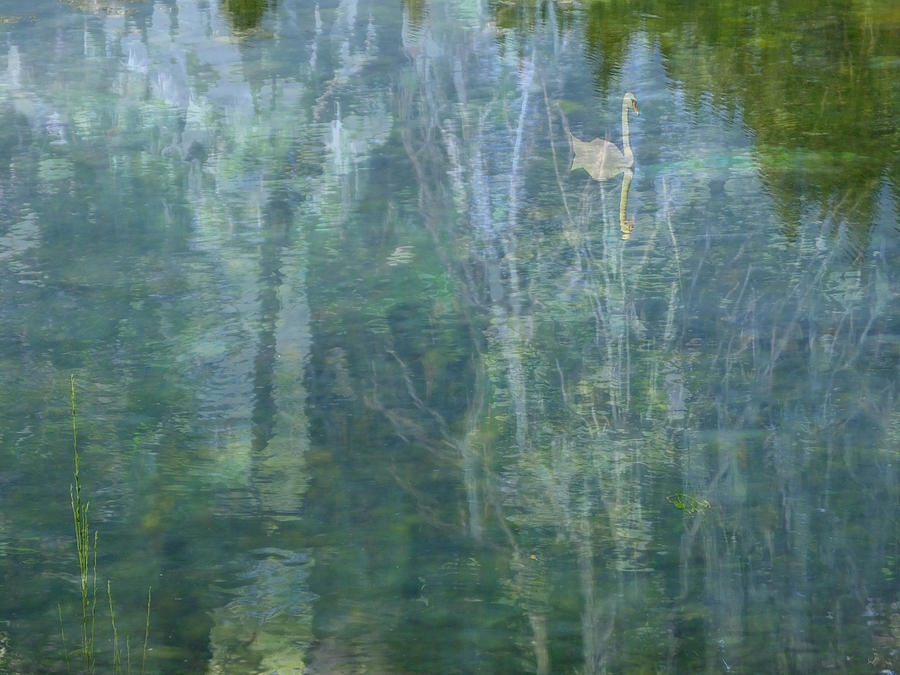 River Photograph - Swanee River by Lyn  Perry